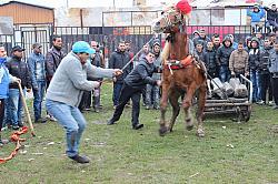 Ромите, конете и Тодоровден